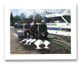 April 7, 2014: 55, 28, 25, 22 lbs. Halibut, 14 lbs. Chinook Salmon - Race Rocks  - Carl, Greg, and Marty from Vancouver BC