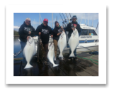 May 6, 2014: 45, 35, 32, 28, 28 lbs. Halibut - Constance Bank  Keely, Neil, Linda, and Dennis from Beacon Hill Farm - 18 years in a row with Blue Wolf Charters