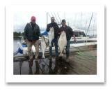 May 24, 2014: 17, 24, 29 lbs. Halibut - Constance Bank -  Dave, Blair, Marcel, & Jerry from Montreal and Victoria