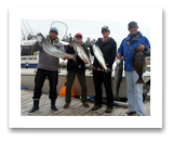 June 27, 2014 : 18, 17, 13, 11 lbs. Chinook Salmon and small Halibut - Sheringham  Point -  John, John, & Dave from Victoria with Rob from Australia