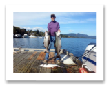 September 9, 2014 : 25, 18, 16 lbs. Chinook Salmon & limit of Coho Salmon  - Muir Creek - Buddy Day out with Roy and Glen from Victoria BC