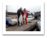 March 1, 2015 : 38 & 22 lbs. Halibut - Race Rocks - Dan & Jay from Victoria BC