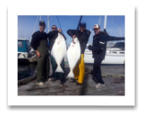 March 14, 2015 : 47 & 41 lbs. Halibut - Race Rocks - Dan, Adam, Trevor, & Mike from Victoria BC