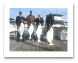 March 13, 2015 : 65, 48, 28, 27 lbs. Halibut - Race Rocks - Dale, owner from Island View Tree Service and crew Dave, Ryan, & Brett from  Victoria BC