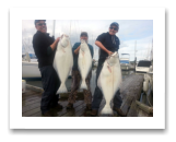March 28, 2015 : 58, 34, 29 lbs. Halibut - Sydney Channel - The Tino Family. Phil, Cathy, & Drake from Idaho