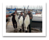 April 10, 2015 : 50, 38, 27 lbs. Halibut - Clover Point - Buddies day out with Roy, Jim, & Tory