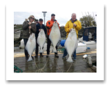 April 13, 2015 : 65, 59, 32, 28 lbs. Halibut - Clover Point - Dennis, Pat, Ryan, & Stephanie from Victoria BC.