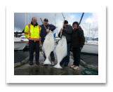 April 14, 2015 : 53 & 51 lbs. Halibut - Clover Point - Dar, Kenn, Paige, & Derek from Island View Tree Service in Victoria BC