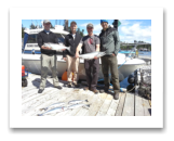 "June 19, 2015 : 14 & 10 lbs. Chinook Salmon, Hatchery Coho, & Pink Salmon - Trap Shack - Ian, Josh, Andy, and Bryan ""The Banana Man"" from Nanaimo and Victoria BC"