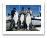 March 31, 2016 : 53, 45, 26 lbs. Halibut - Race Rocks - Dave, Scott, & Tim from Vancouver
