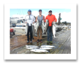 September 2, 2016: 24, 23, 16, 16, 14, 14 lbs. Chinook Salmon & Hatchery Coho Salmon - Otter Point -  Alex, Richard, & Nick Mann from oakville Ontario