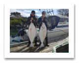 March 8, 2017 : 42 & 41 lbs. Halibut  - Albert Head - Bentonville from Maple Ridge BC with Alex from Vancouver BC