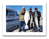 April 21, 2017 : 35 lbs. Halibut & 13, 11 lbs. Chinook Salmon- Albert Head - Alan, Gabe, & Joe from Calgary Alberta