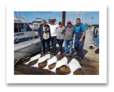 May 4, 2017 : 50, 48, 39, 35, 29 lbs. Halibut  - Albert Head - Beacon Hill Petting Zoo 23rd year with Blue Wolf - DFennis, Ron, Neil, & Keely from Victoria BC