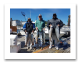 August 22, 2017 : 16, 15, 14, 14, 12, 11 lbs. Chinook Salmon - Trap Shack - Jason & John from Victoria with Fred from Duncan BC
